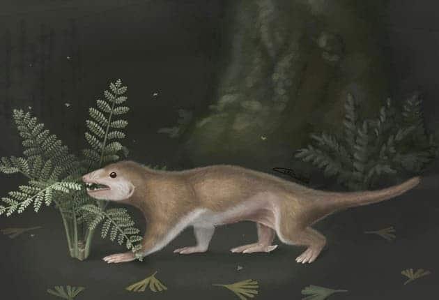 megaconus