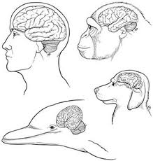 the-brain-thinkg it