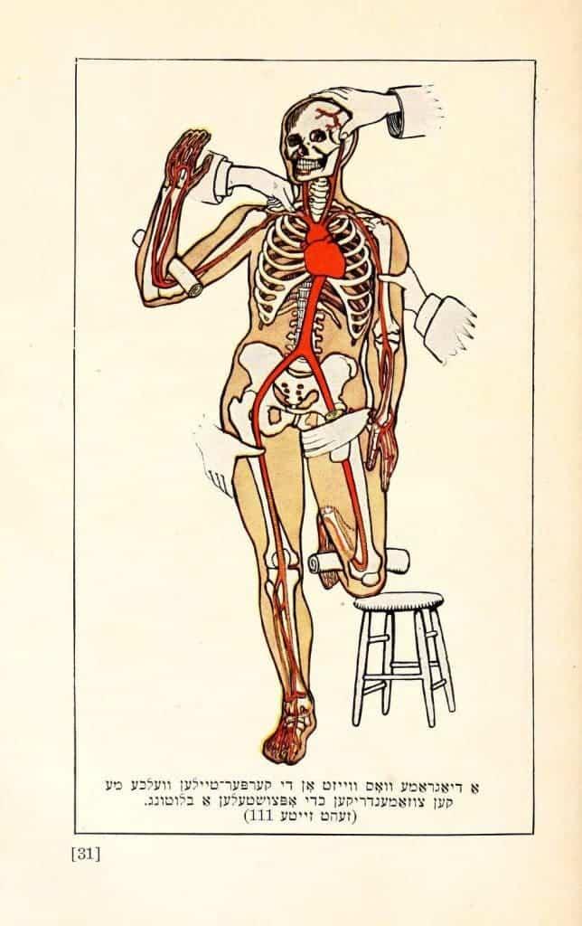 Examples Of Stunning Vintage Anatomy