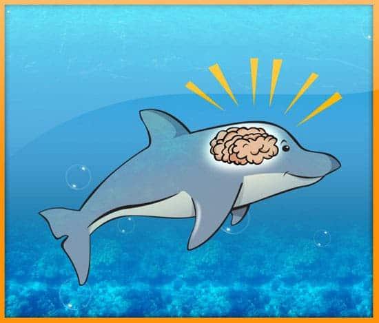 dolphin_smart_brain