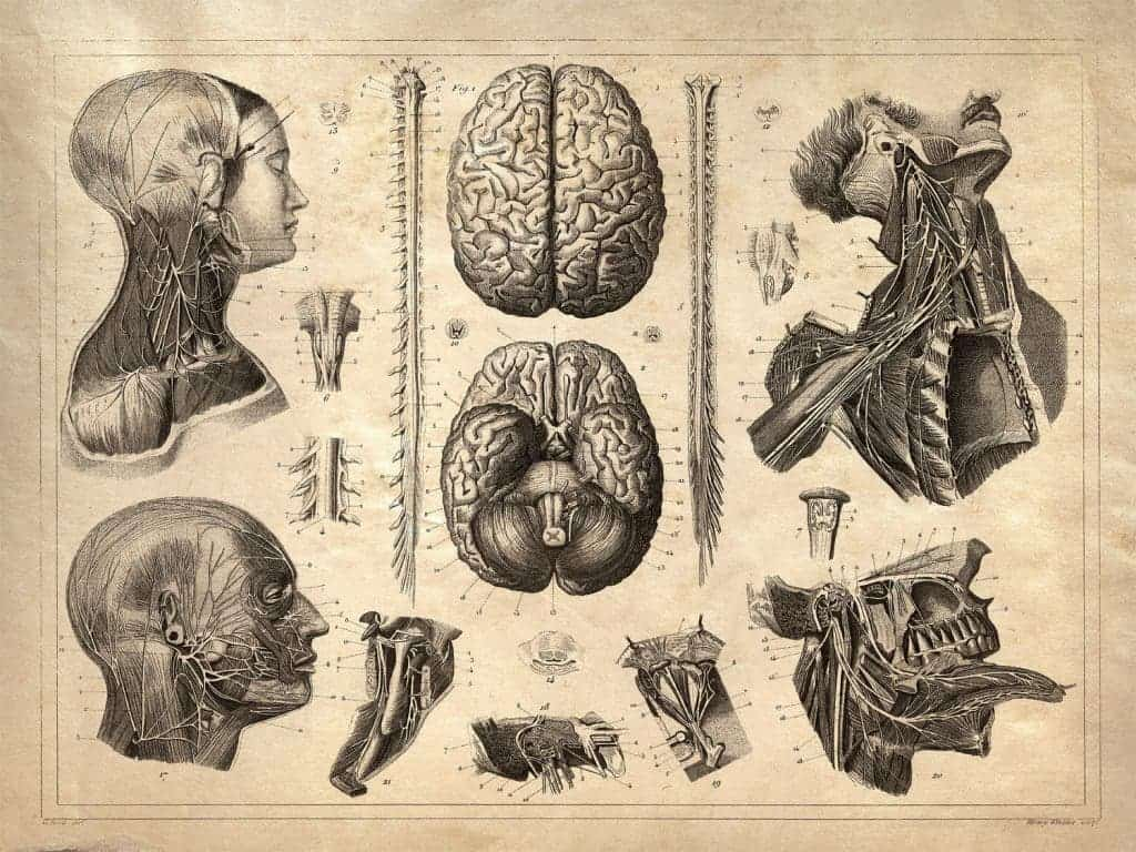 Examples of Stunning Vintage anatomy