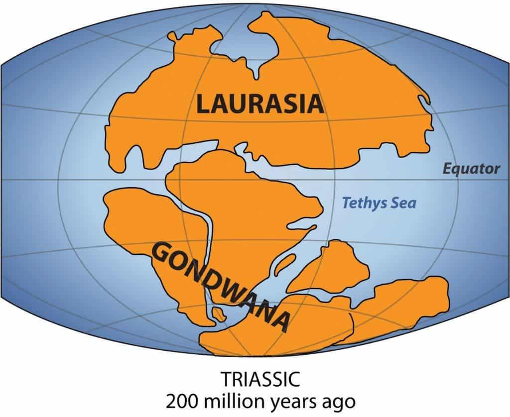 350 million year old former inhabitant of gondwana found publicscrutiny Images