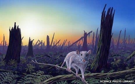 mammals kpg
