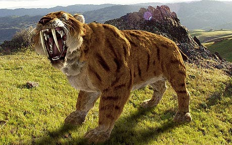 sabre_tooth_cat