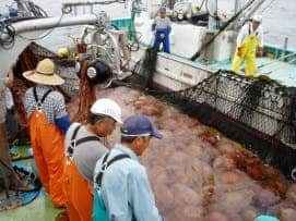 Japanese Fishing Net (Credit: Shin-ichi Uye, Hiroshima University)