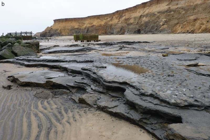 Area A at Happisburgh: View of footprint surface looking south, also showing underlying horizontally bedded laminated silts. (c) PLOS ONE
