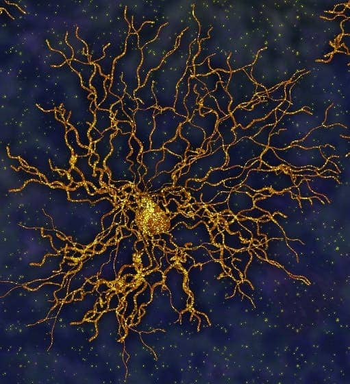 Artist impression of astrocytes. Photo: UCLA