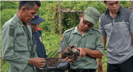 orangutan graveyard indonesia