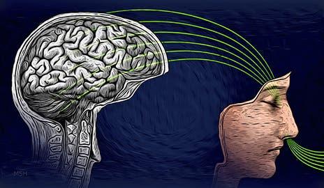 brain-cold