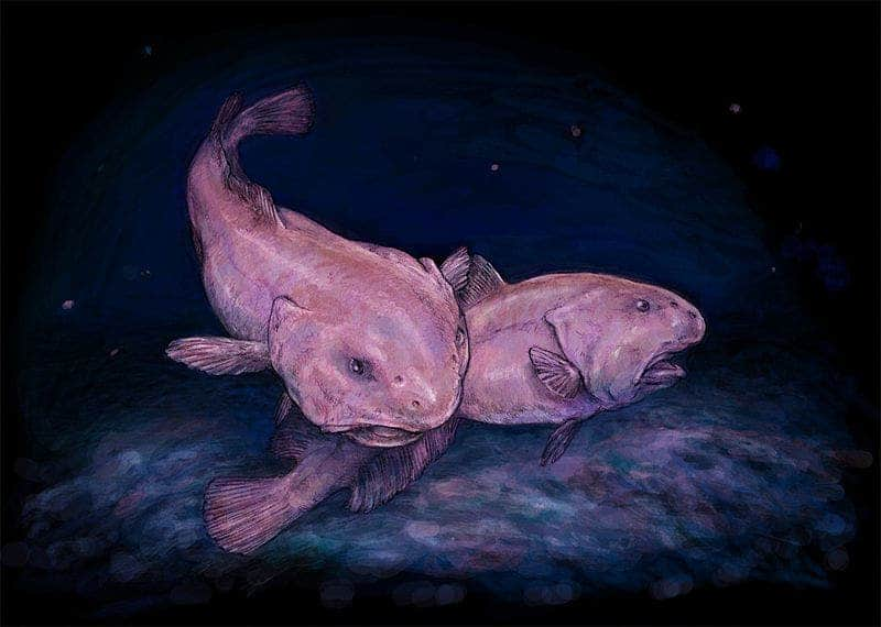 Remarkably Bizarre Deep Sea Creatures