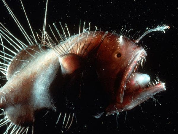 Remarkably bizarre deep sea creatures -- spooky and