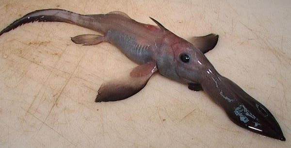 Remarkably Bizarre Deep Sea Creatures Not A Freak Show - 15 transparent animals that almost dont look real
