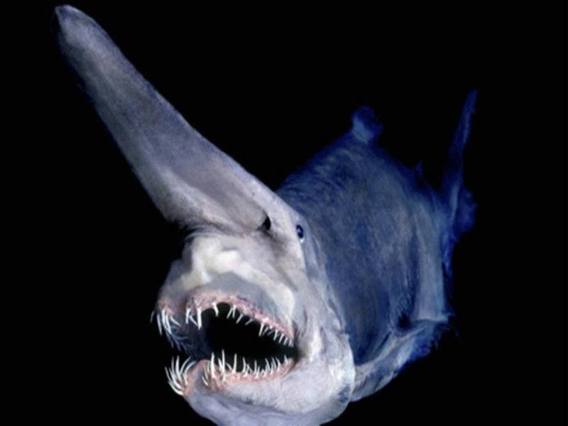 Remarkably bizarre deep sea creatures -- spooky and