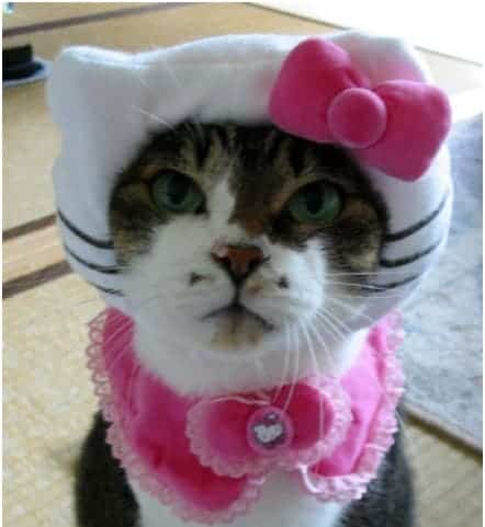 humiliated cat