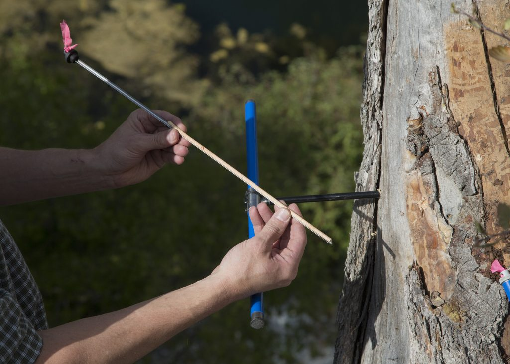 research_tree_ring