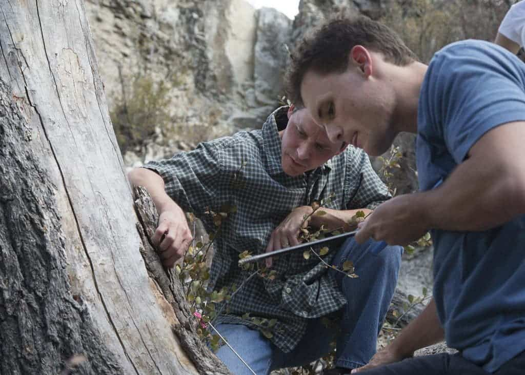 Professor Bekker and a student extract a core sample from a dead tree in Provo canyon