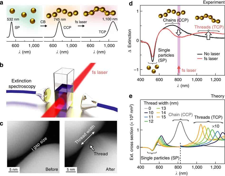 (a) Schematic process. Charge-stabilized gold NPs exhibit single particle plasmons (SP) at 532 nm resonance. Particles glued into chains by CB molecules give CCPs (745nm resonance). Illumination with femtosecond laser pulses (schematic b) connects chains by metal thread into strings, producing TCPs (1,100nm resonance). (c) TEM images of NP chain gaps before and after femtosecond irradiation. (d) After adding CB molecules to the NPs, spectra are different with/without femtosecond laser irradiation. Single NP response is subtracted from spectra. As the threads develop, a spectral dip around the laser wavelength and a peak at the rising TCP emerge. (e) Numerical simulations of resonant six-NP-long chains display TCP mode and indicate the range of nanothread widths contributing to the signal in d.