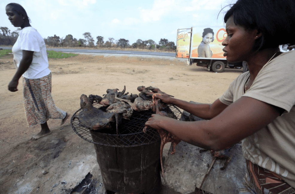 March 29, 2014 A woman dries meat near a highway to the city of Yamoussoukro, Ivory Coast. The disease comes from infected animals, most likely the fruit bat, which can infect animals that humans eat. Thierry Gouegnon/Reuters