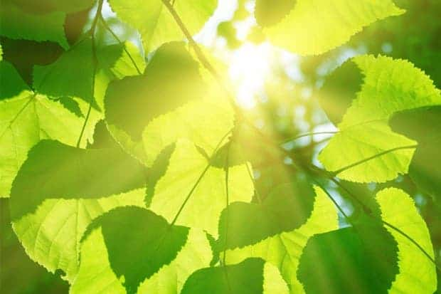 Scientists have determined the exact structure of an important photosynthesis complex at a crucial stage. Photo: Shutterstock