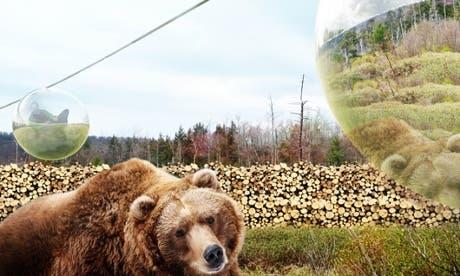 bear_zoo