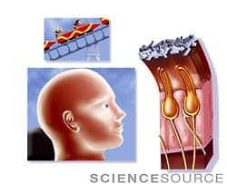 nerve_cells_ear