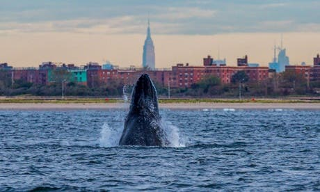 Photo: Artie Raslich/Gotham Whale