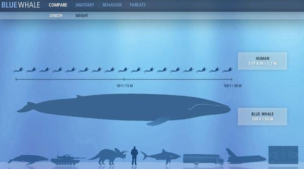 Image: sandiegowhalewatching.com