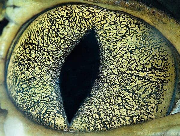 Cayman eye