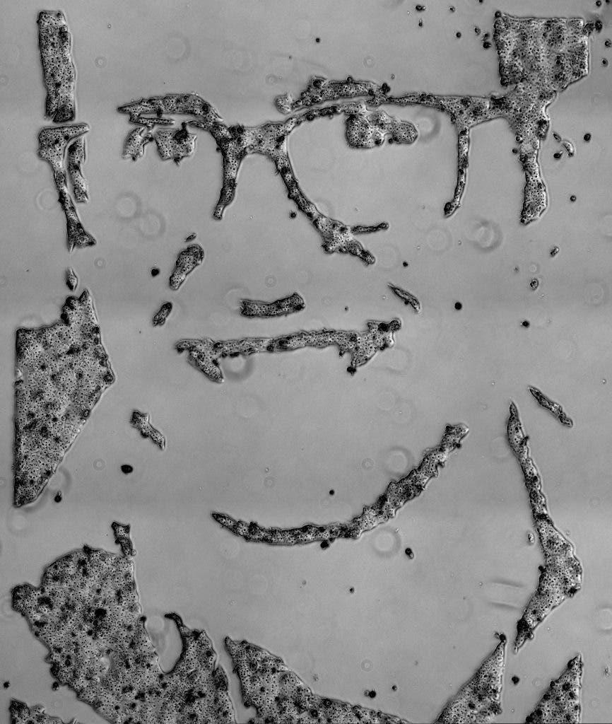 danino_liver_portrait