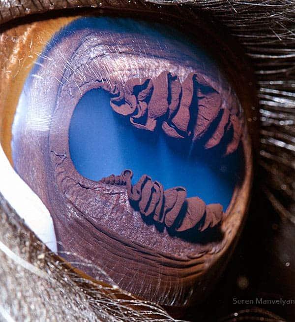 Llama eye