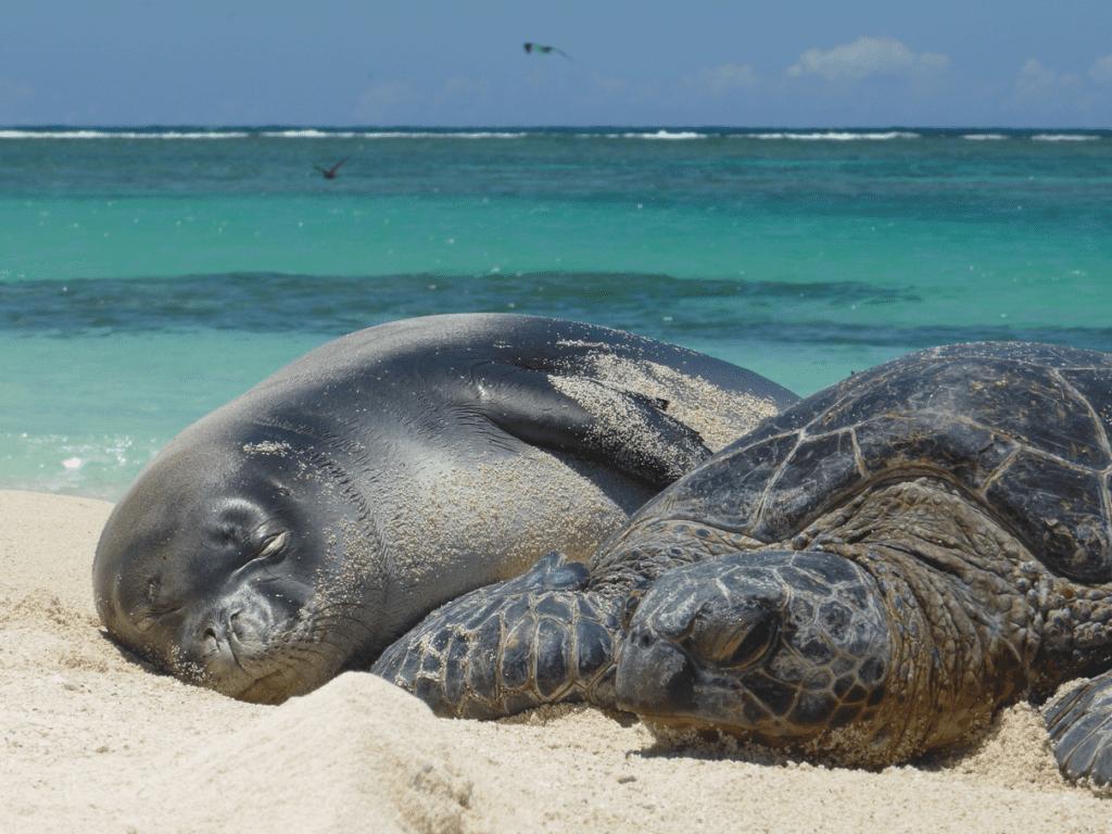 obama proclaims worlds largest marine park