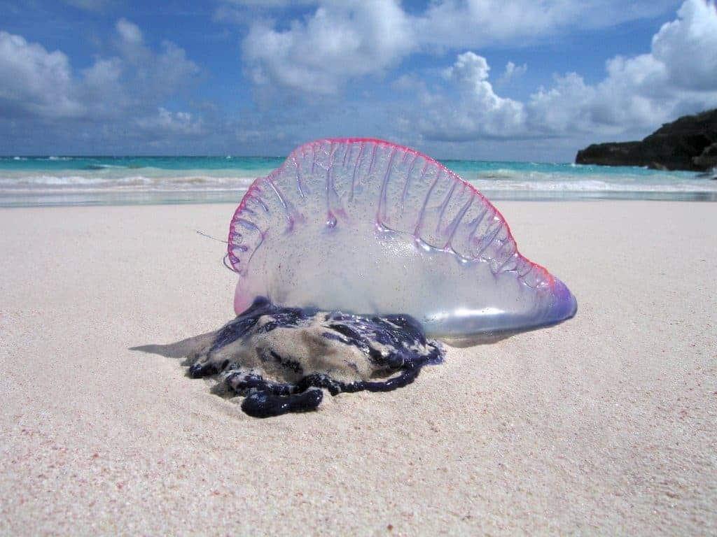 Animal Love Vero Beach