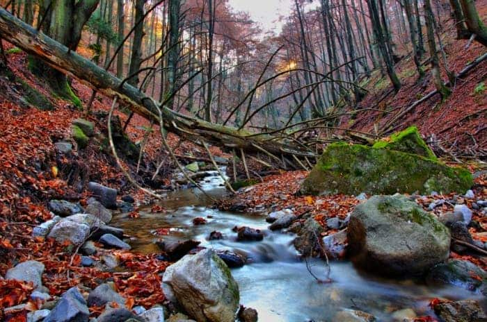In the beech forest by Daniel Danko