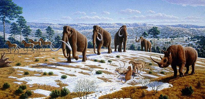 The Quaternary period saw the extinctions of numerous predominantly larger, especially megafaunal, species, many of which occurred during the transition from the Pleistocene to the Holocene epoch. Among the main causes hypothesized by paleontologists are natural climate change and overkill by humans. Image: Wikimedia Commons