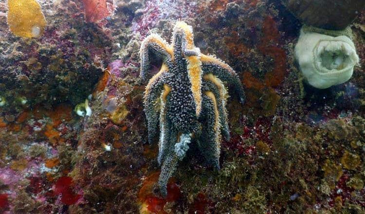 Credit: Vancouver Aquarium