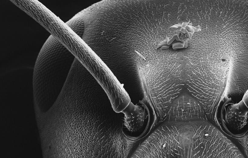 nano scupture
