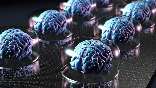 brain storage