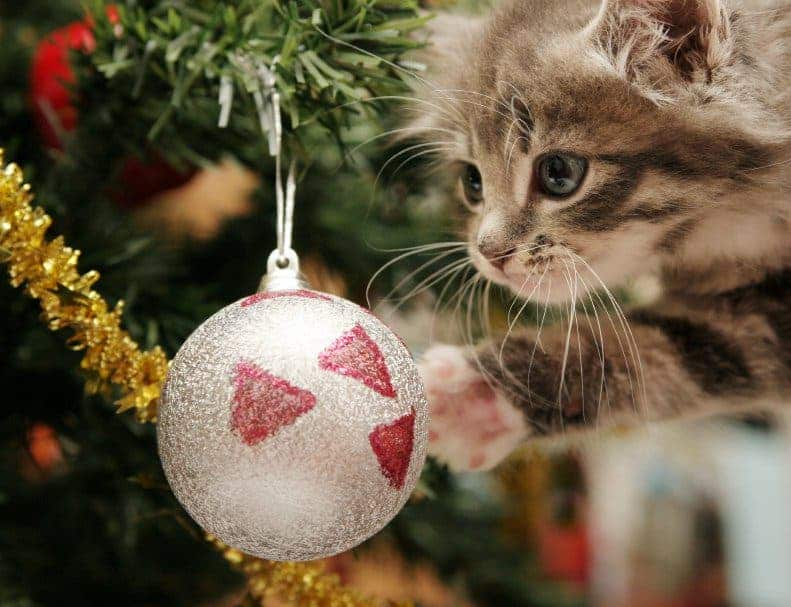 both natural and artificial christmas trees - Where Does The Christmas Tree Come From