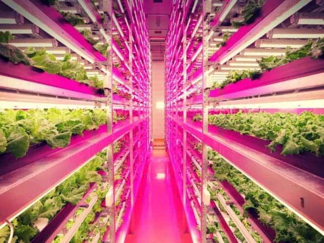 indoor-farm-japan-interior-644x483