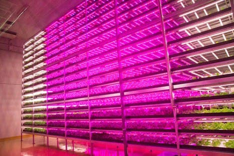 Biggest indoor farm is 100 times more productive than