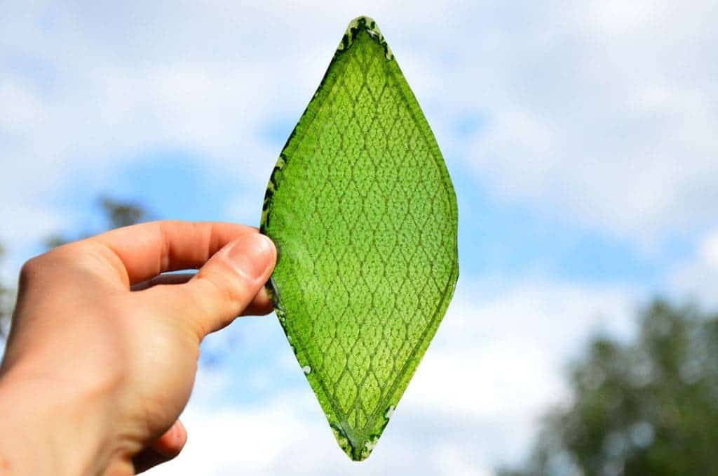 First Man Made Biological Leaf Might Actually Be Useless