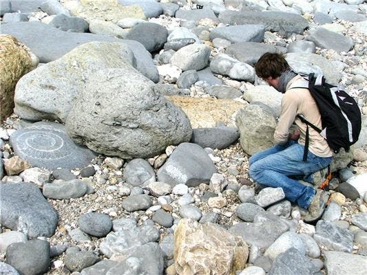Dr. Daniele Silvestro, University of Gothenburg finding fossils. Image courtesy of University of Gothenburg