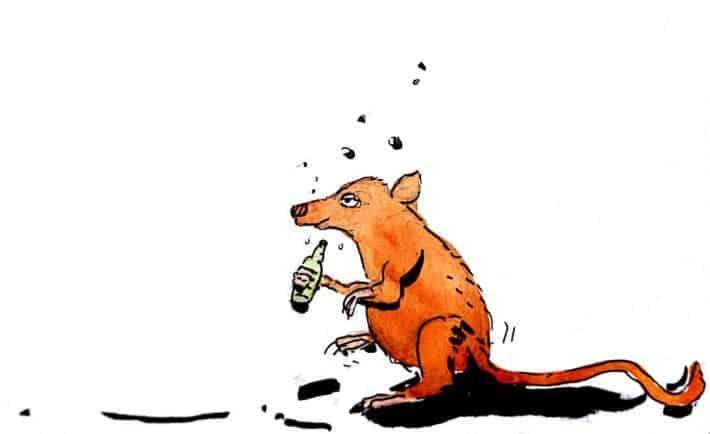 drunken rat