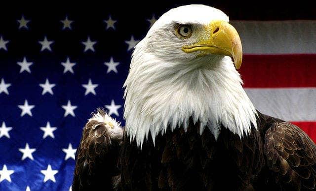 Good News For Americas Mascot The Bald Eagle Is No Longer Endangered