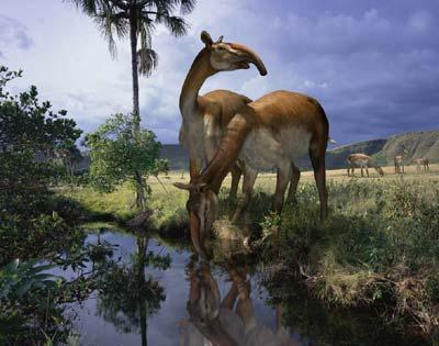 """Macrauchenia (""""long llama""""). Image: Wikimedia Commons"""