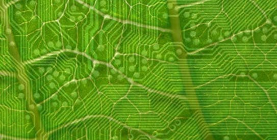 artificial-leaf-cc543