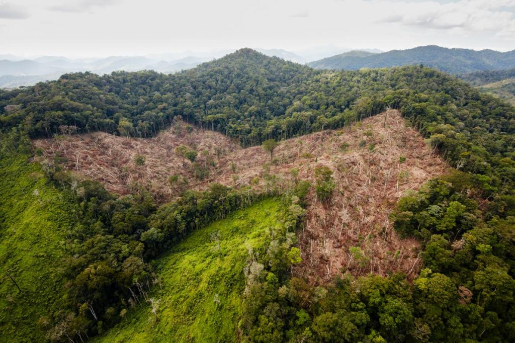 In addition to looting, another threat to the newly discovered ruins is deforestation for cattle ranching, seen here on a hillside on the way to the site. At its present pace, deforestation could reach the valley within a few years.  PHOTOGRAPH BY DAVE YODER, NATIONAL GEOGRAPHIC