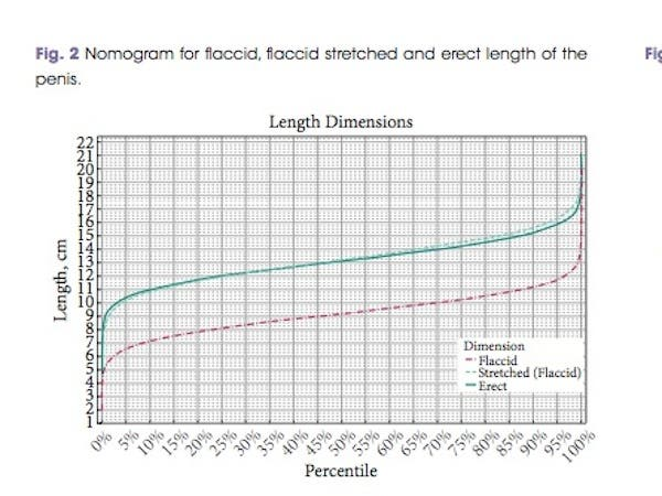 Excellent Measurements of penis