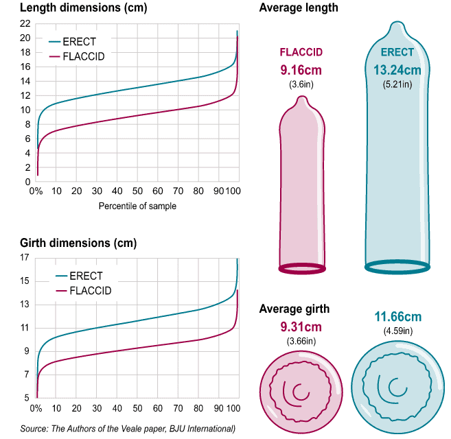 penis size average