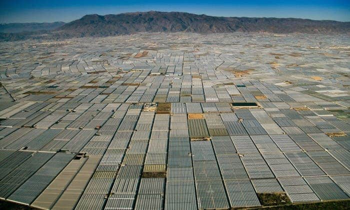 As far as the eye can see, greenhouses cover the landscape in Almeria, Spain. Photograph: Yann Arthus Bertrand